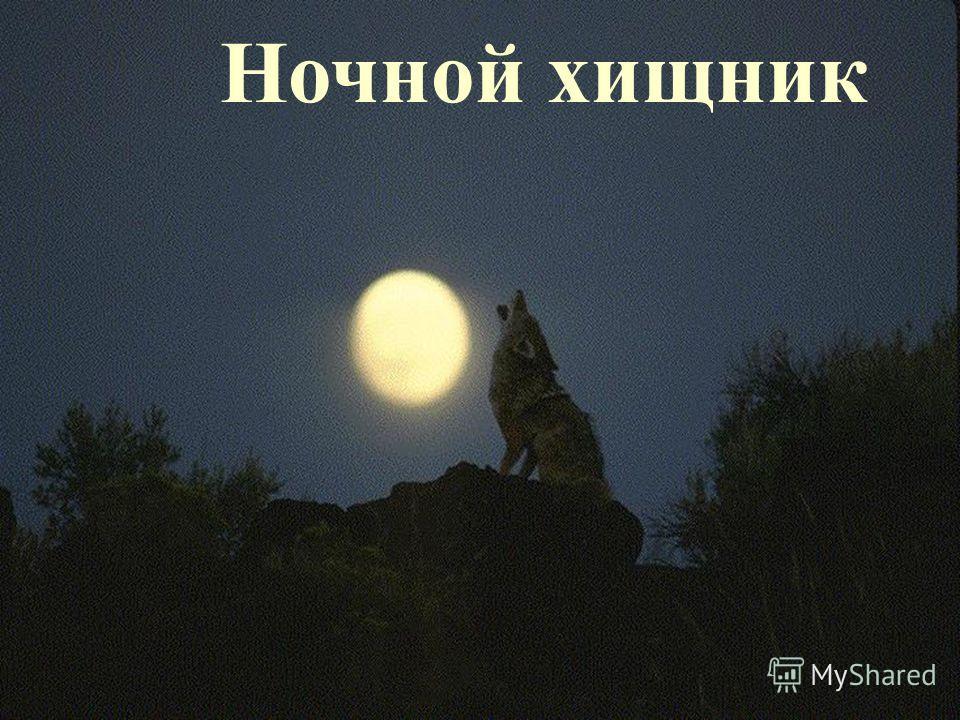 Ночной хищник