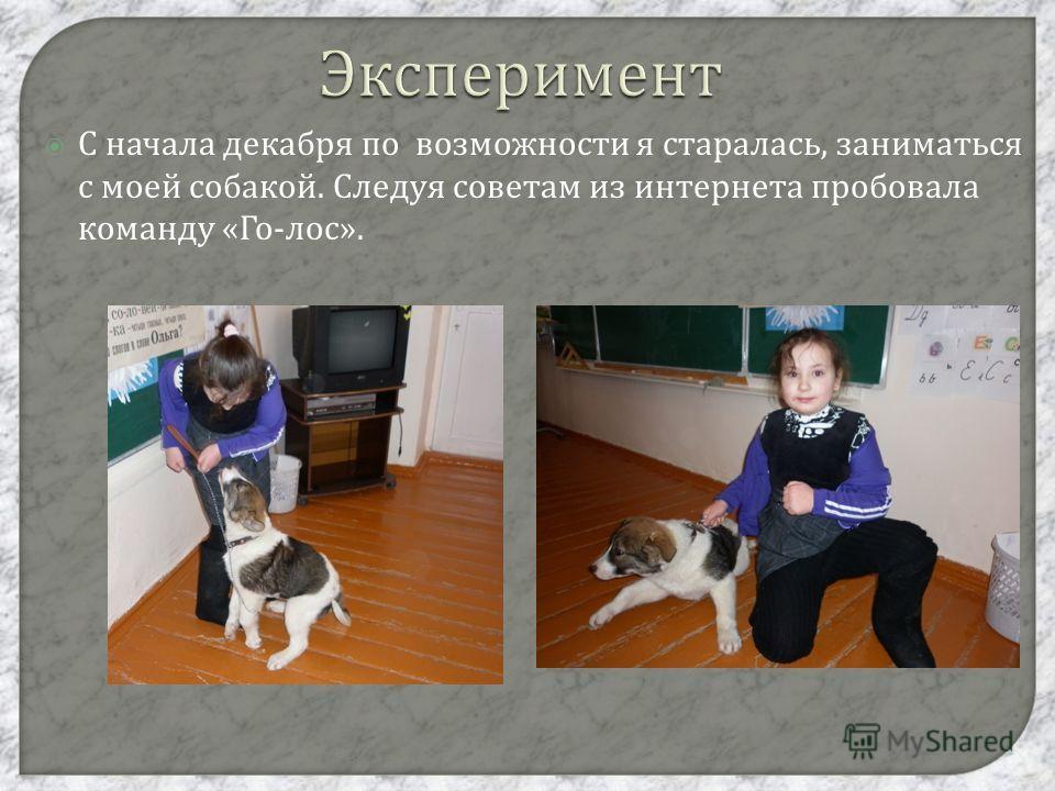 Эксперимент С начала декабря по возможности я старалась, заниматься с моей собакой. Следуя советам из интернета пробовала команду « Го - лос ».