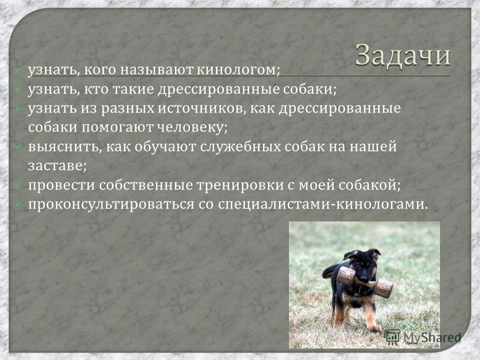 узнать, кого называют кинологом ; узнать, кто такие дрессированные собаки ; узнать из разных источников, как дрессированные собаки помогают человеку ; выяснить, как обучают служебных собак на нашей заставе ; провести собственные тренировки с моей соб