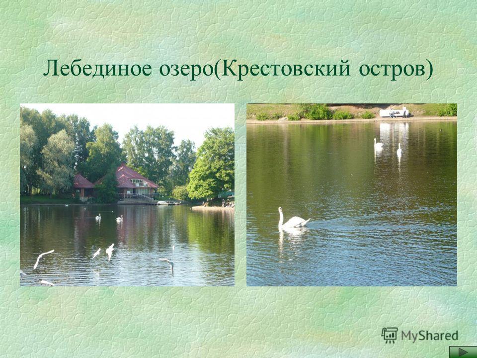 Лебединое озеро(Крестовский остров)