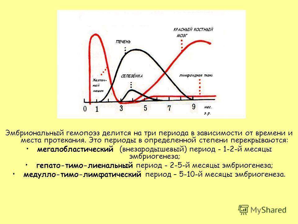 Эмбриональный гемопоэз делится на три периода в зависимости от времени и места протекания. Это периоды в определенной степени перекрываются: мегалобластический (внезародышевый) период - 1-2-й месяцы эмбриогенеза; гепато-тимо-лиенальный период - 2-5-й