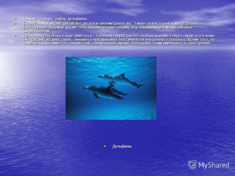Лучшие пловцы - рыбы, дельфины. Лучшие пловцы - рыбы, дельфины. Скорости многих рыб достигают десятков километров в час. Такую скорость рыбы могут развивать благодаря обтекаемой форме тела, конфигурации головы, обусловливающей малое лобовое сопротивл