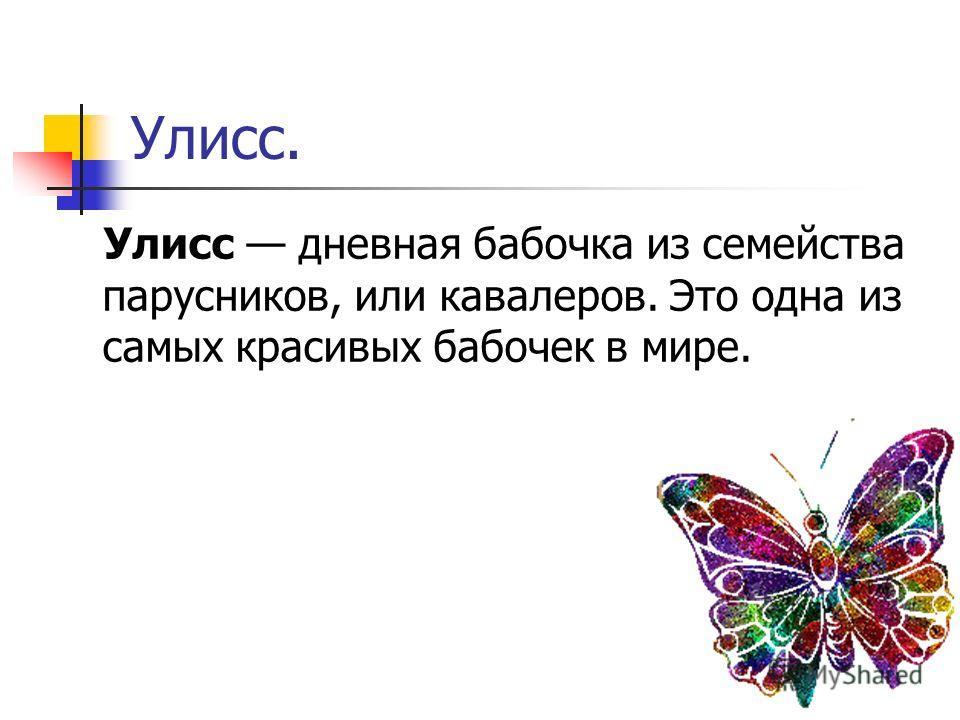 Улисс. Улисс дневная бабочка из семейства парусников, или кавалеров. Это одна из самых красивых бабочек в мире.