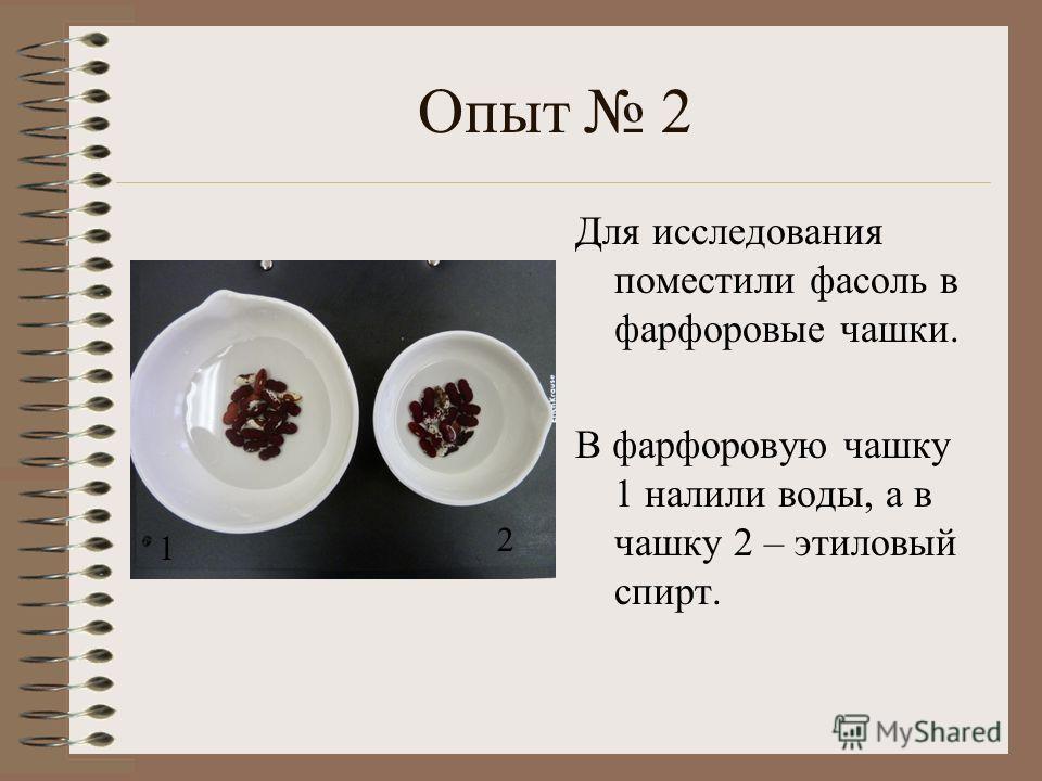 Опыт 2 Для исследования поместили фасоль в фарфоровые чашки. В фарфоровую чашку 1 налили воды, а в чашку 2 – этиловый спирт. 1 2