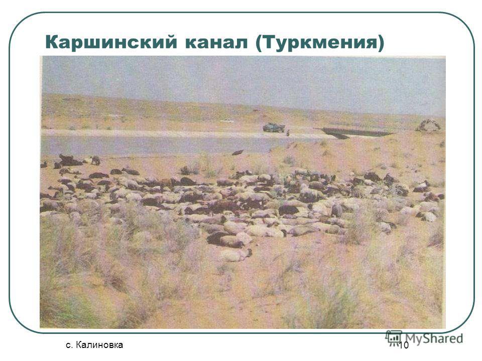 с. Калиновка 10 Каршинский канал (Туркмения)
