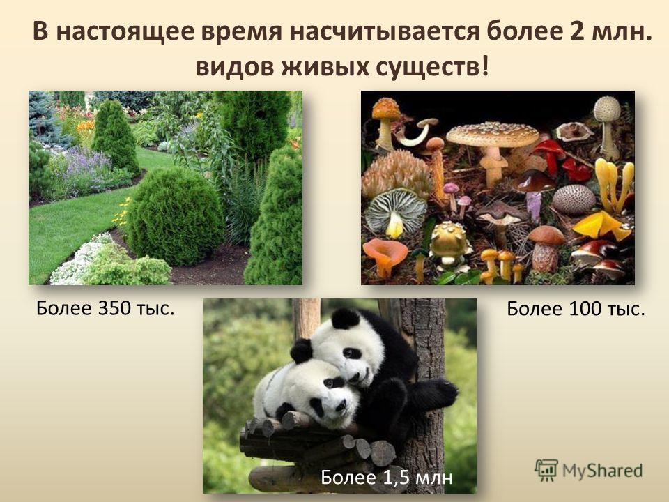 В настоящее время насчитывается более 2 млн. видов живых существ! Более 350 тыс. Более 100 тыс. Более 1,5 млн