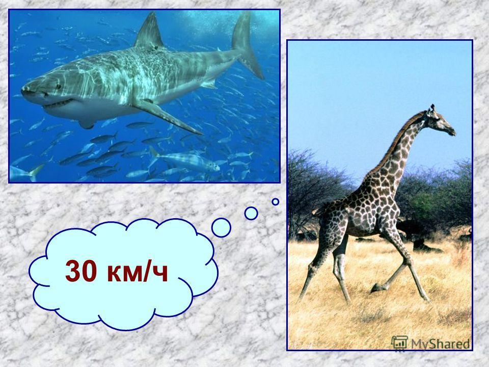 30 км/ч
