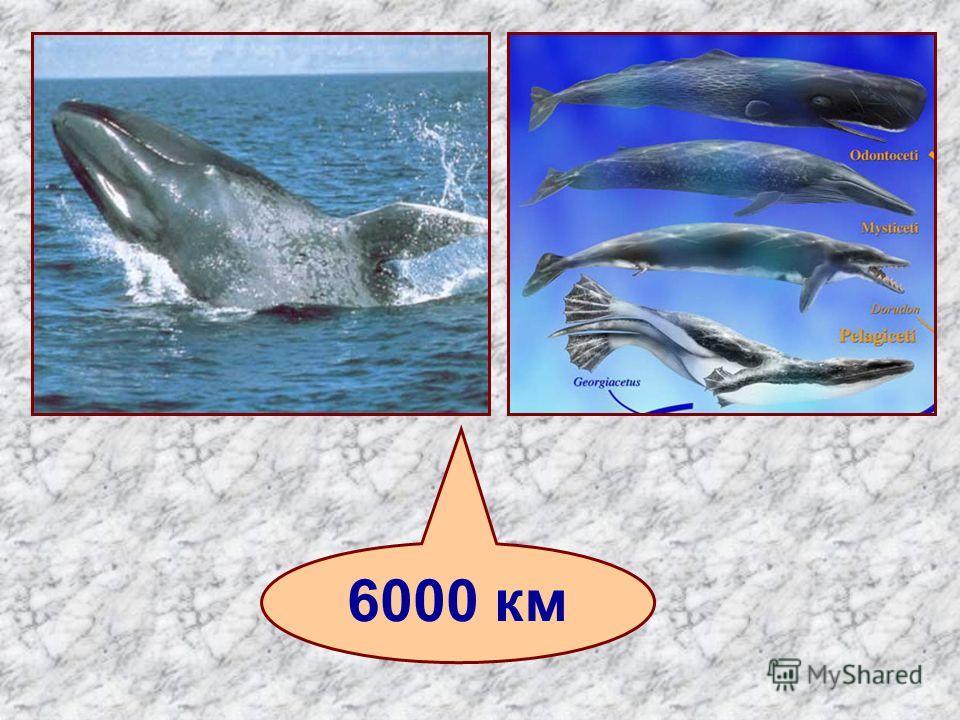 6000 км