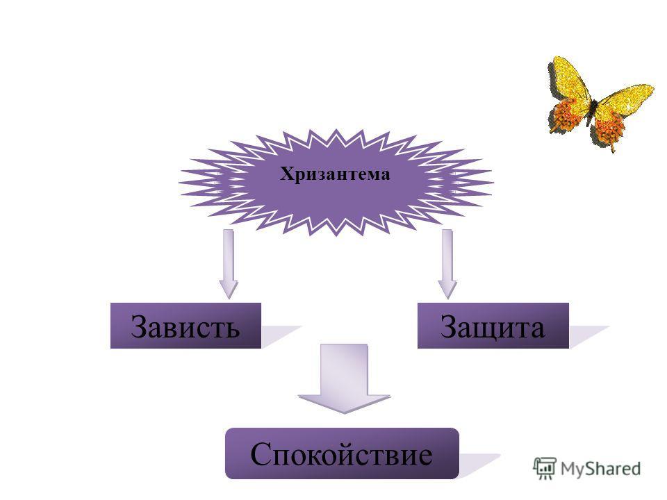 Хризантема ЗавистьЗащита Спокойствие