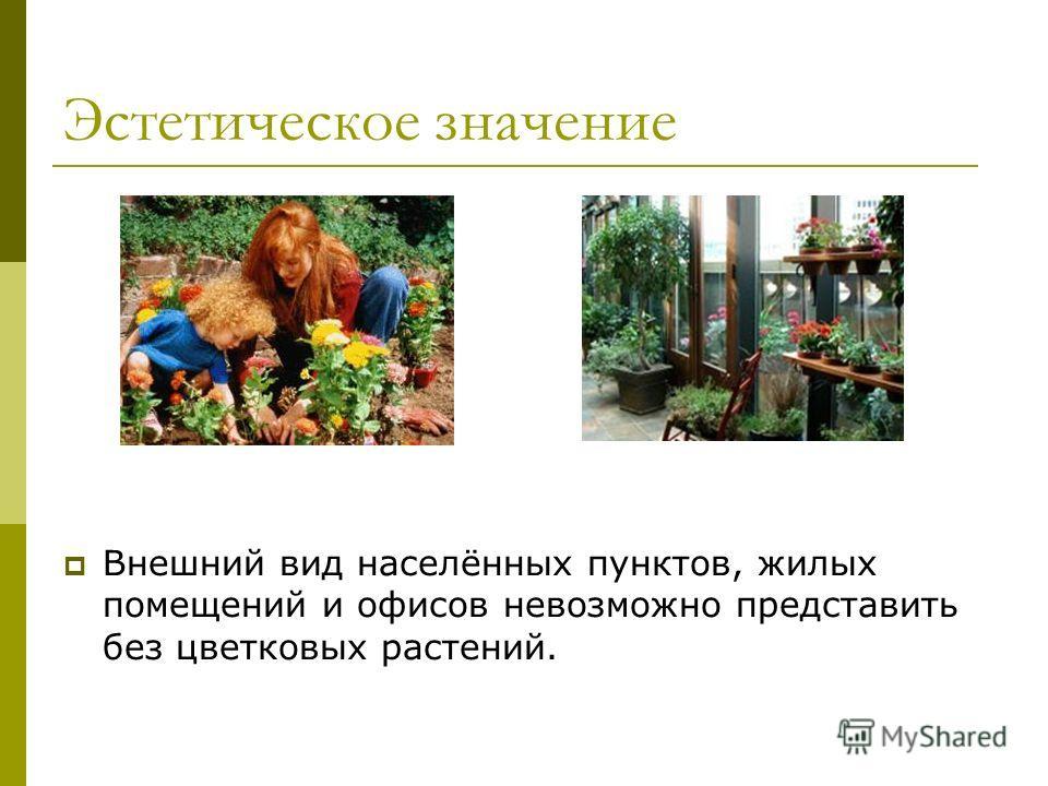 Эстетическое значение Внешний вид населённых пунктов, жилых помещений и офисов невозможно представить без цветковых растений.