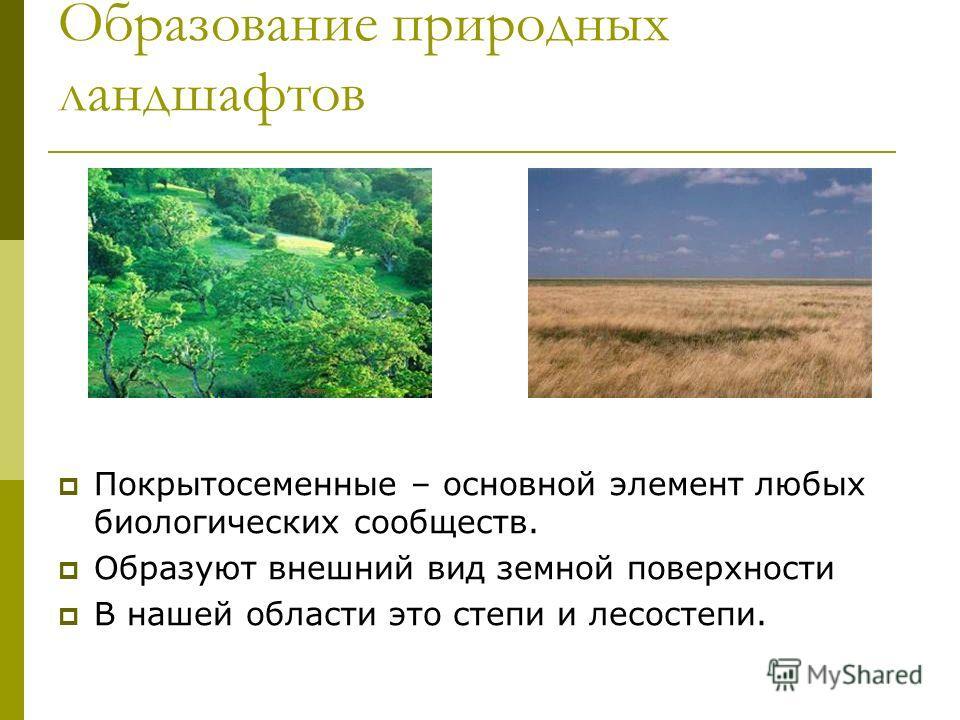 Образование природных ландшафтов Покрытосеменные – основной элемент любых биологических сообществ. Образуют внешний вид земной поверхности В нашей области это степи и лесостепи.