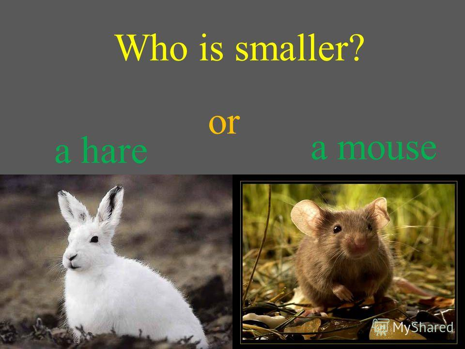 Who is smaller? a hare a mouse or