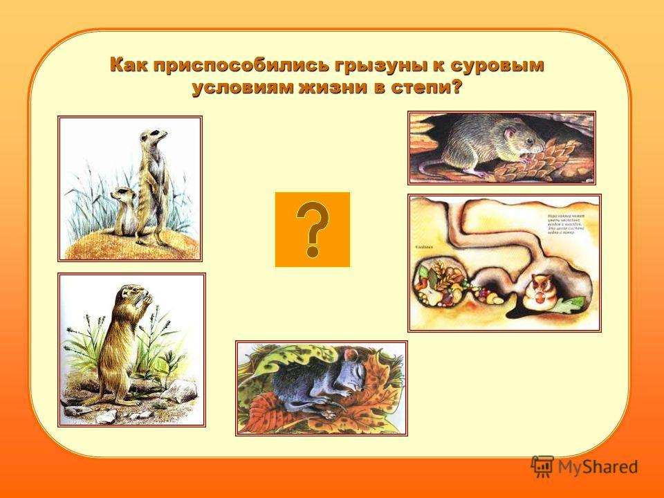 Как приспособились грызуны к суровым условиям жизни в степи?