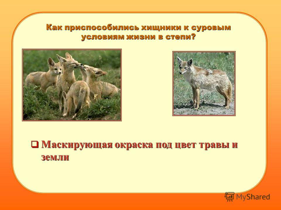 Как приспособились хищники к суровым условиям жизни в степи? Маскирующая окраска под цвет травы и земли