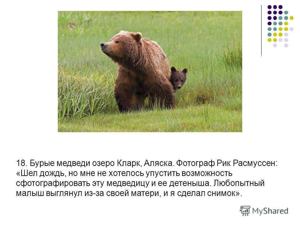 18. Бурые медведи озеро Кларк, Аляска. Фотограф Рик Расмуссен: «Шел дождь, но мне не хотелось упустить возможность сфотографировать эту медведицу и ее детеныша. Любопытный малыш выглянул из-за своей матери, и я сделал снимок».