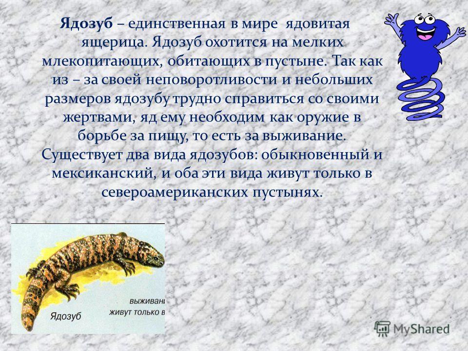 Ядозуб – единственная в мире ядовитая ящерица. Ядозуб охотится на мелких млекопитающих, обитающих в пустыне. Так как из – за своей неповоротливости и небольших размеров ядозубу трудно справиться со своими жертвами, яд ему необходим как оружие в борьб