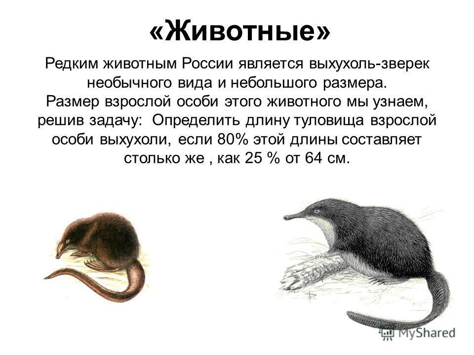 «Животные» Редким животным России является выхухоль-зверек необычного вида и небольшого размера. Размер взрослой особи этого животного мы узнаем, решив задачу: Определить длину туловища взрослой особи выхухоли, если 80% этой длины составляет столько