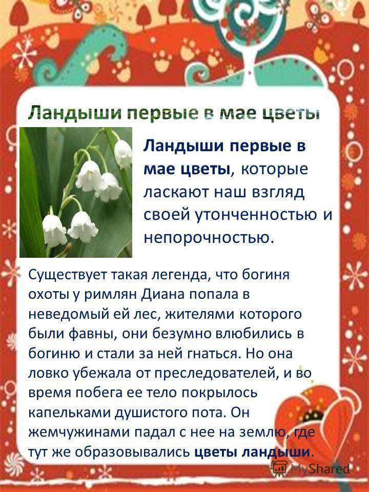 Ландыши первые в мае цветы, которые ласкают наш взгляд своей утонченностью и непорочностью. Существует такая легенда, что богиня охоты у римлян Диана попала в неведомый ей лес, жителями которого были фавны, они безумно влюбились в богиню и стали за н