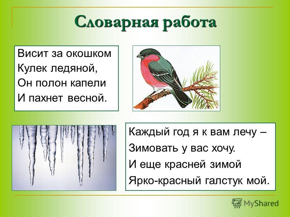 Словарная работа Висит за окошком Кулек ледяной, Он полон капели И пахнет весной. Каждый год я к вам лечу – Зимовать у вас хочу. И еще красней зимой Ярко-красный галстук мой.
