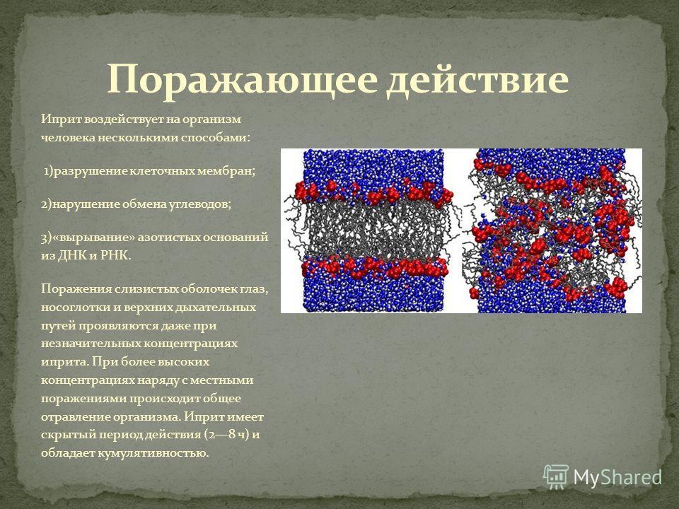 Иприт воздействует на организм человека несколькими способами: 1)разрушение клеточных мембран; 2)нарушение обмена углеводов; 3)«вырывание» азотистых оснований из ДНК и РНК. Поражения слизистых оболочек глаз, носоглотки и верхних дыхательных путей про