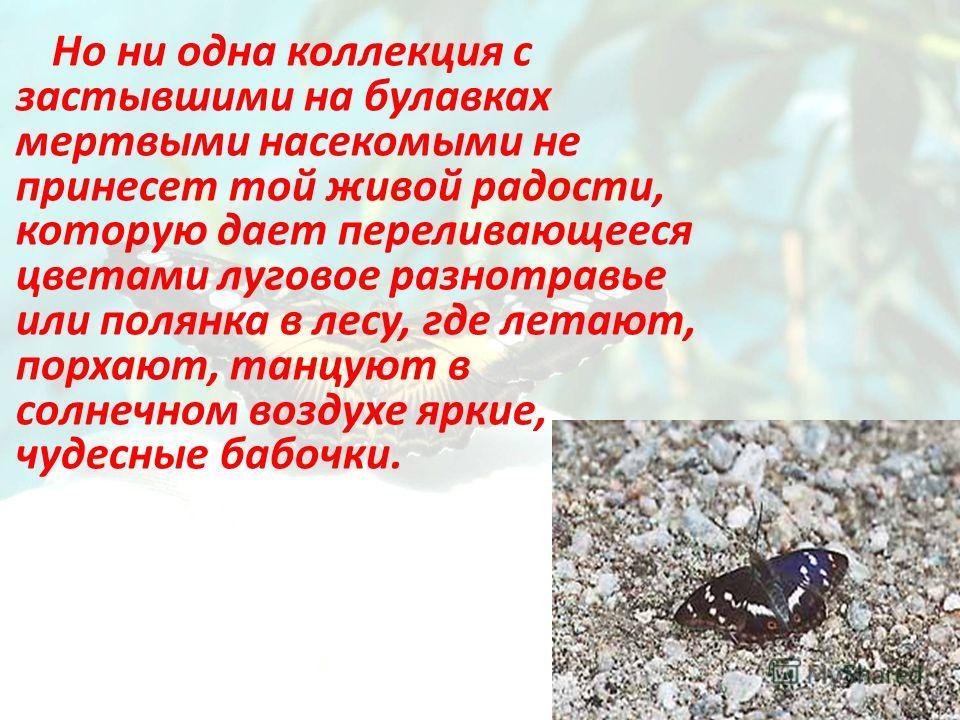 Но ни одна коллекция с застывшими на булавках мертвыми насекомыми не принесет той живой радости, которую дает переливающееся цветами луговое разнотравье или полянка в лесу, где летают, порхают, танцуют в солнечном воздухе яркие, чудесные бабочки.