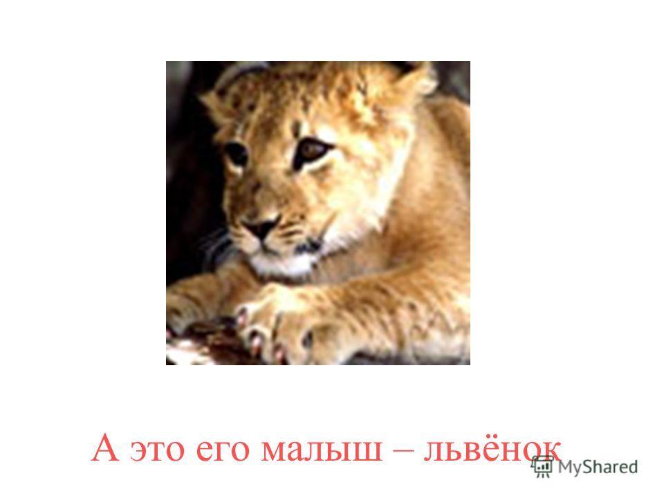 Это лев