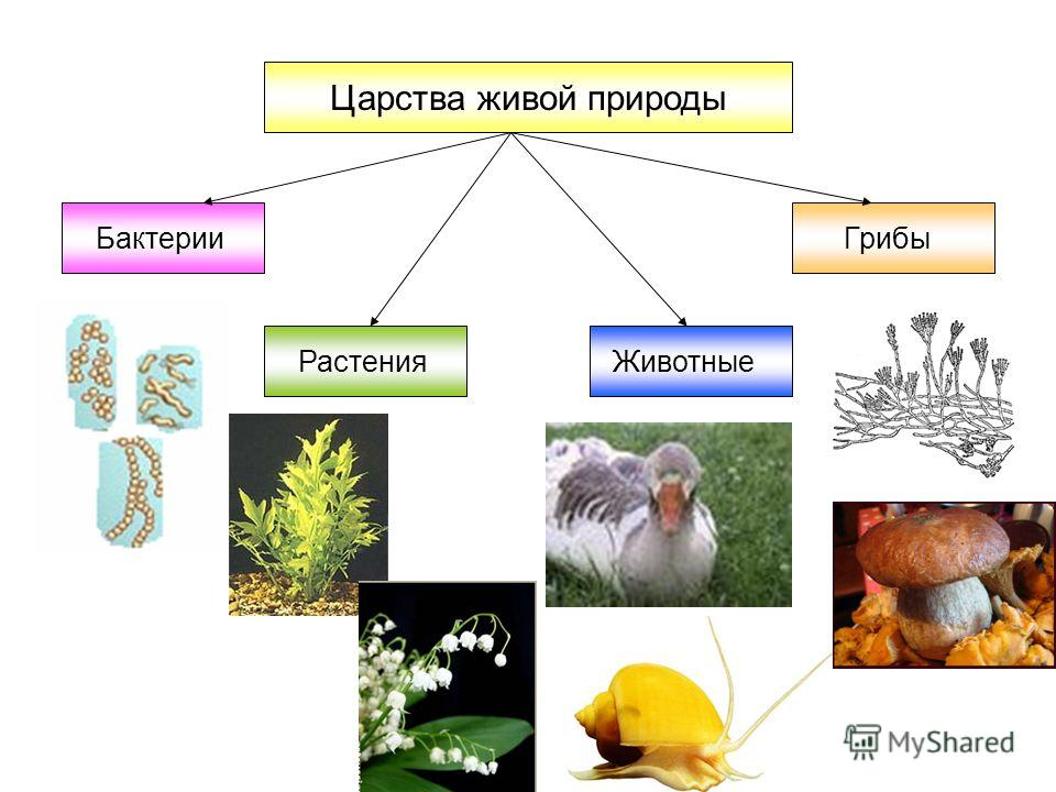 Доклад разнообразие живой природы 2540
