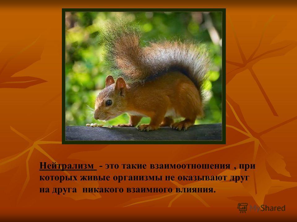 Нейтрализм - это такие взаимоотношения, при которых живые организмы не оказывают друг на друга никакого взаимного влияния.