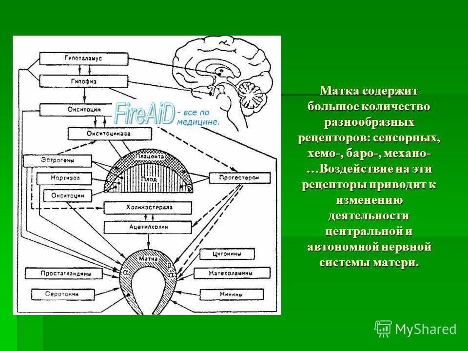Матка содержит большое количество разнообразных рецепторов: сенсорных, хемо-, баро-, механо- …Воздействие на эти рецепторы приводит к изменению деятельности центральной и автономной нервной системы матери.