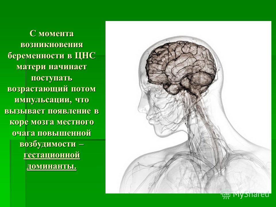 С момента возникновения беременности в ЦНС матери начинает поступать возрастающий потом импульсации, что вызывает появление в коре мозга местного очага повышенной возбудимости – гестационной доминанты.