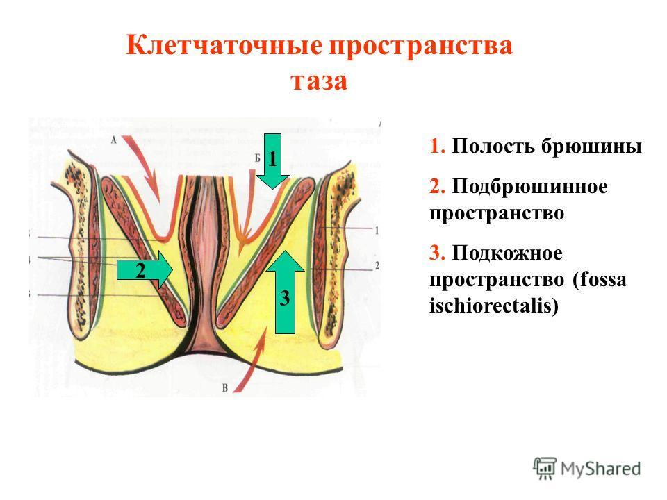 Клетчаточные пространства таза 1. Полость брюшины 2. Подбрюшинное пространство 3. Подкожное пространство (fossa ischiorectalis) 1 2 3