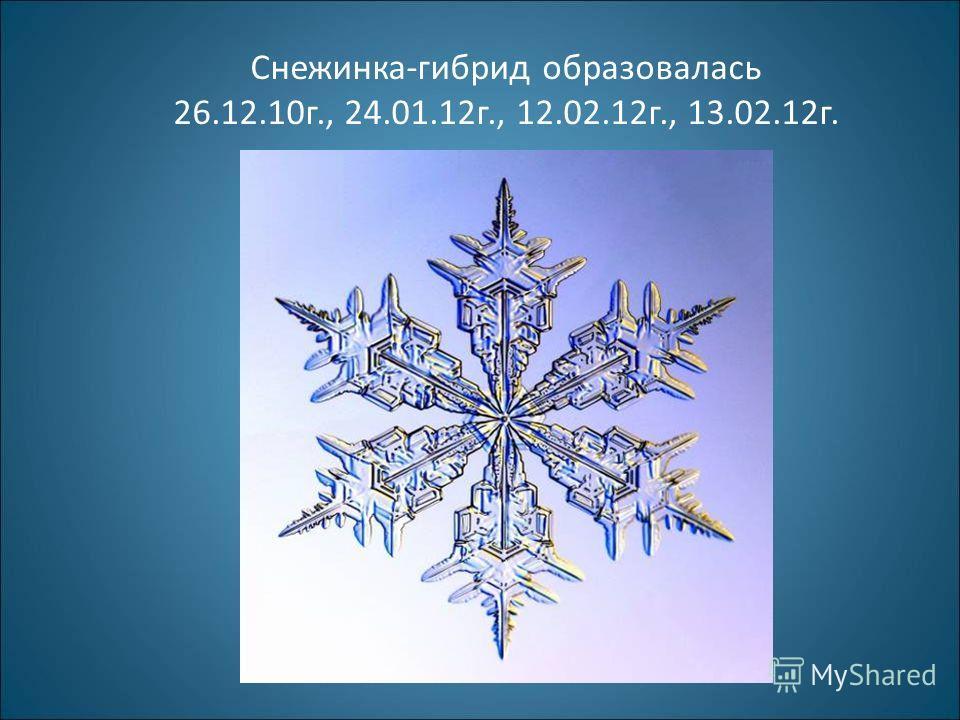 Снежинка-гибрид образовалась 26.12.10г., 24.01.12г., 12.02.12г., 13.02.12г.