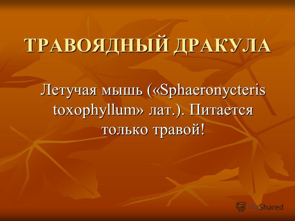 ТРАВОЯДНЫЙ ДРАКУЛА Летучая мышь («Sphaeronycteris toxophyllum» лат.). Питается только травой!