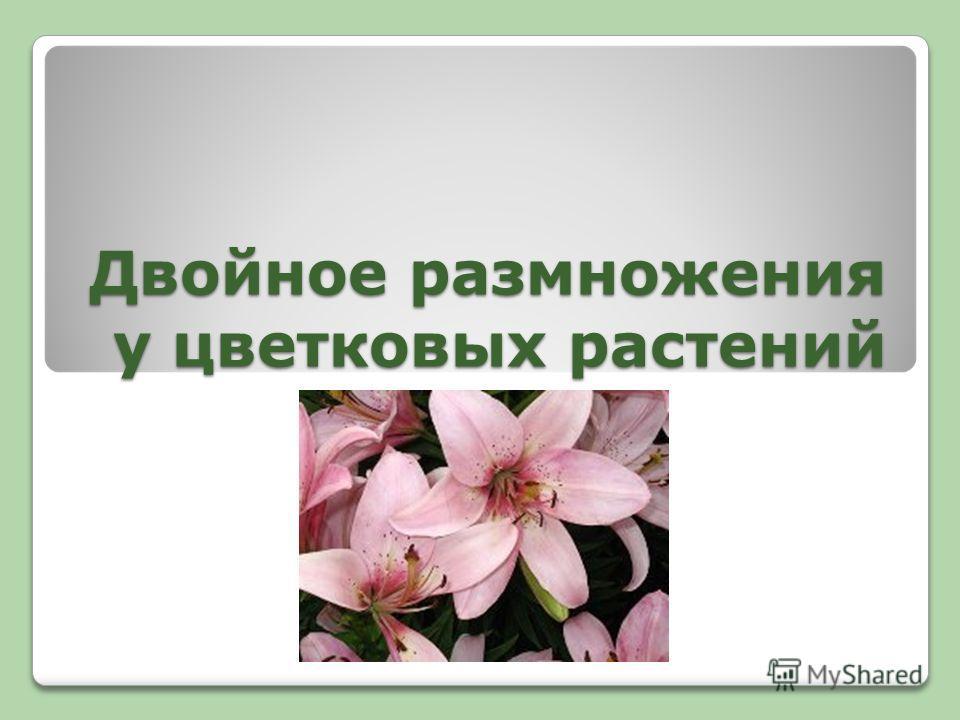 Двойное размножения у цветковых растений