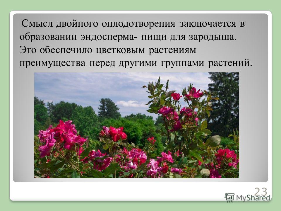 Смысл двойного оплодотворения заключается в образовании эндосперма- пищи для зародыша. Это обеспечило цветковым растениям преимущества перед другими группами растений. 23