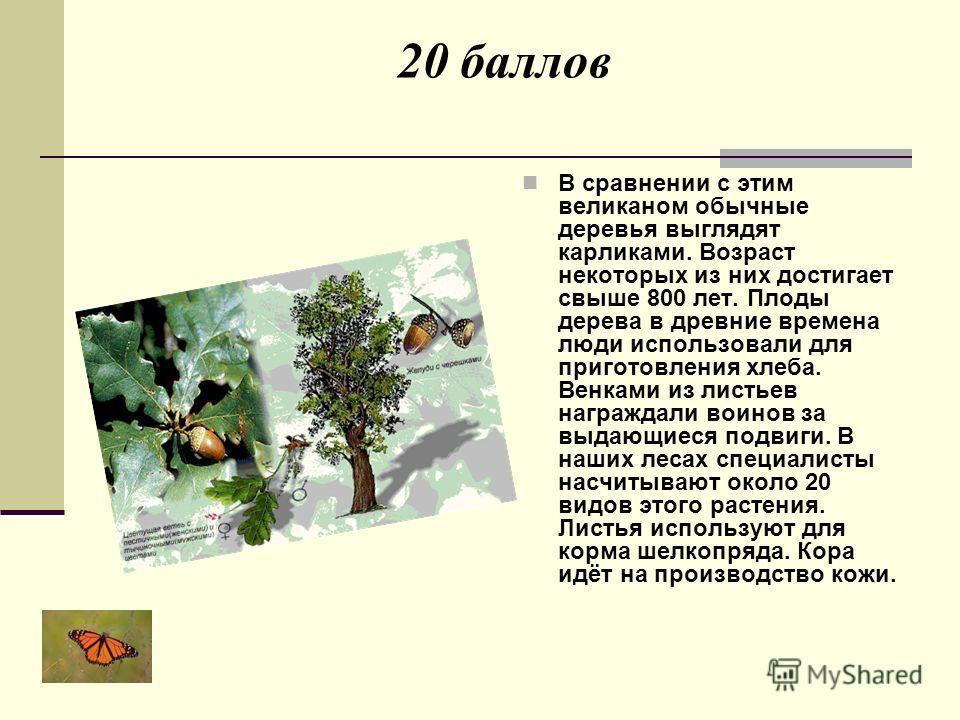 20 баллов В сравнении с этим великаном обычные деревья выглядят карликами. Возраст некоторых из них достигает свыше 800 лет. Плоды дерева в древние времена люди использовали для приготовления хлеба. Венками из листьев награждали воинов за выдающиеся