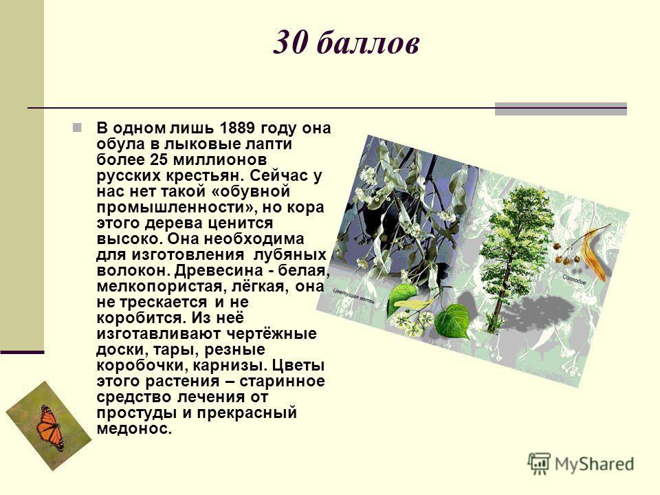 30 баллов В одном лишь 1889 году она обула в лыковые лапти более 25 миллионов русских крестьян. Сейчас у нас нет такой «обувной промышленности», но кора этого дерева ценится высоко. Она необходима для изготовления лубяных волокон. Древесина - белая,