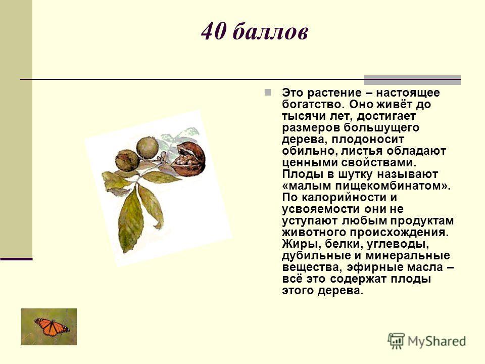 40 баллов Это растение – настоящее богатство. Оно живёт до тысячи лет, достигает размеров большущего дерева, плодоносит обильно, листья обладают ценными свойствами. Плоды в шутку называют «малым пищекомбинатом». По калорийности и усвояемости они не у
