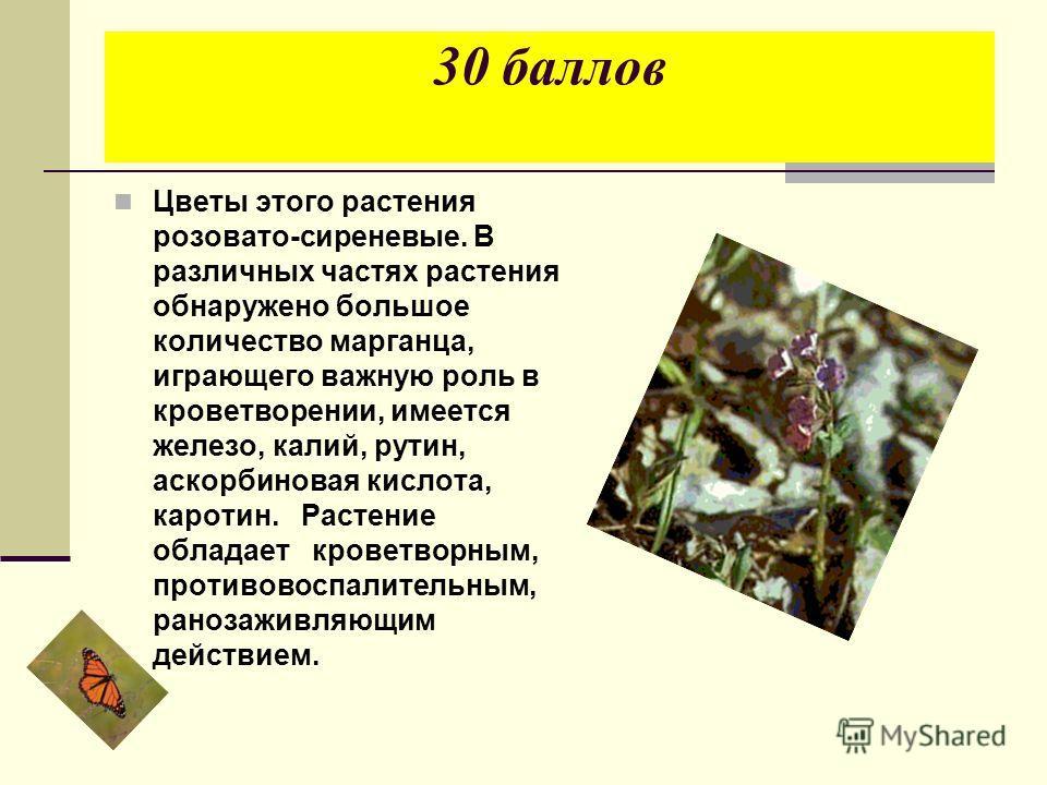 30 баллов Цветы этого растения розовато-сиреневые. В различных частях растения обнаружено большое количество марганца, играющего важную роль в кроветворении, имеется железо, калий, рутин, аскорбиновая кислота, каротин. Растение обладает кроветворным,