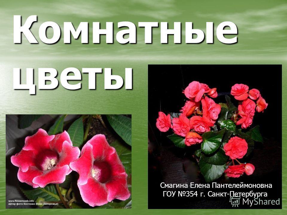 Комнатные цветы Смагина Елена Пантелеймоновна ГОУ 354 г. Санкт-Петербурга