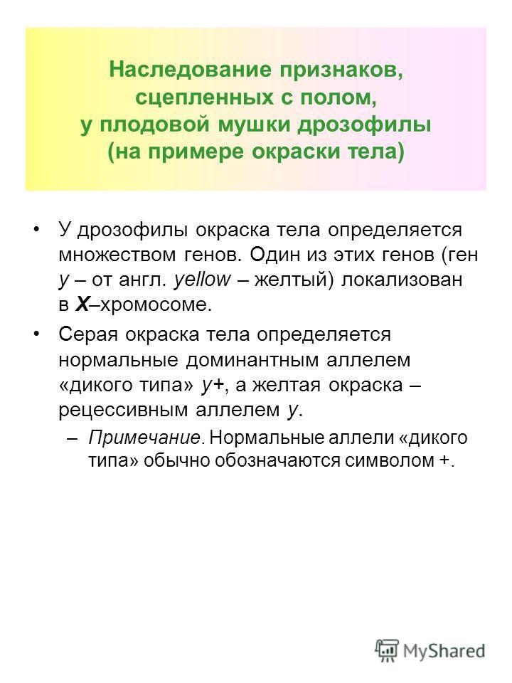 Наследование признаков, сцепленных с полом, у плодовой мушки дрозофилы (на примере окраски тела) У дрозофилы окраска тела определяется множеством генов. Один из этих генов (ген y – от англ. yellow – желтый) локализован в Х–хромосоме. Серая окраска те