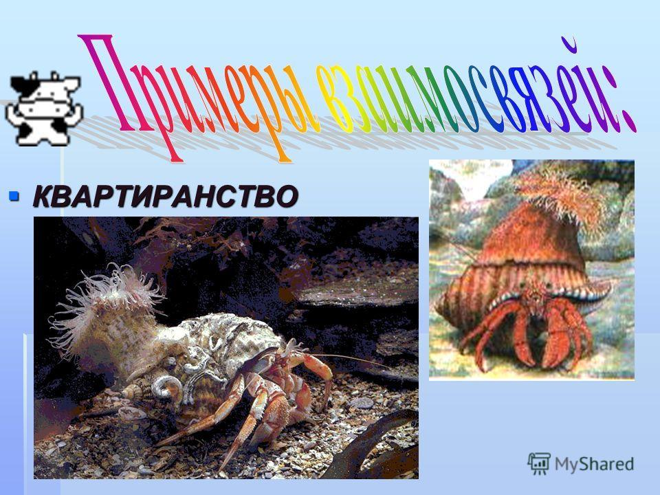 КВАРТИРАНСТВО