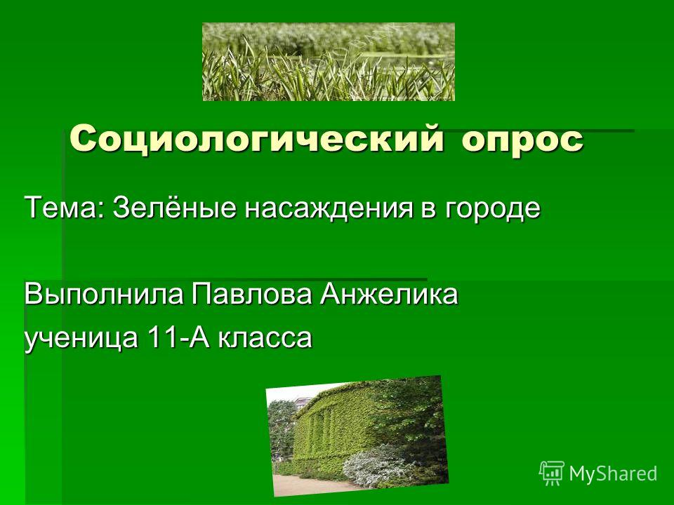 Социологический опрос Тема: Зелёные насаждения в городе Выполнила Павлова Анжелика ученица 11-А класса