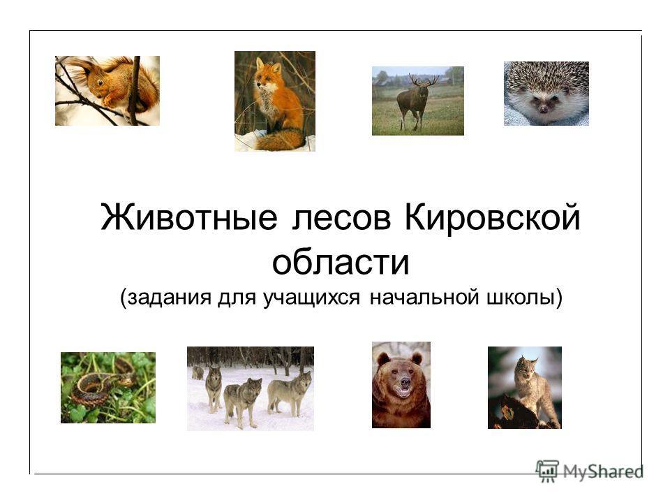 Животные лесов Кировской области (задания для учащихся начальной школы)