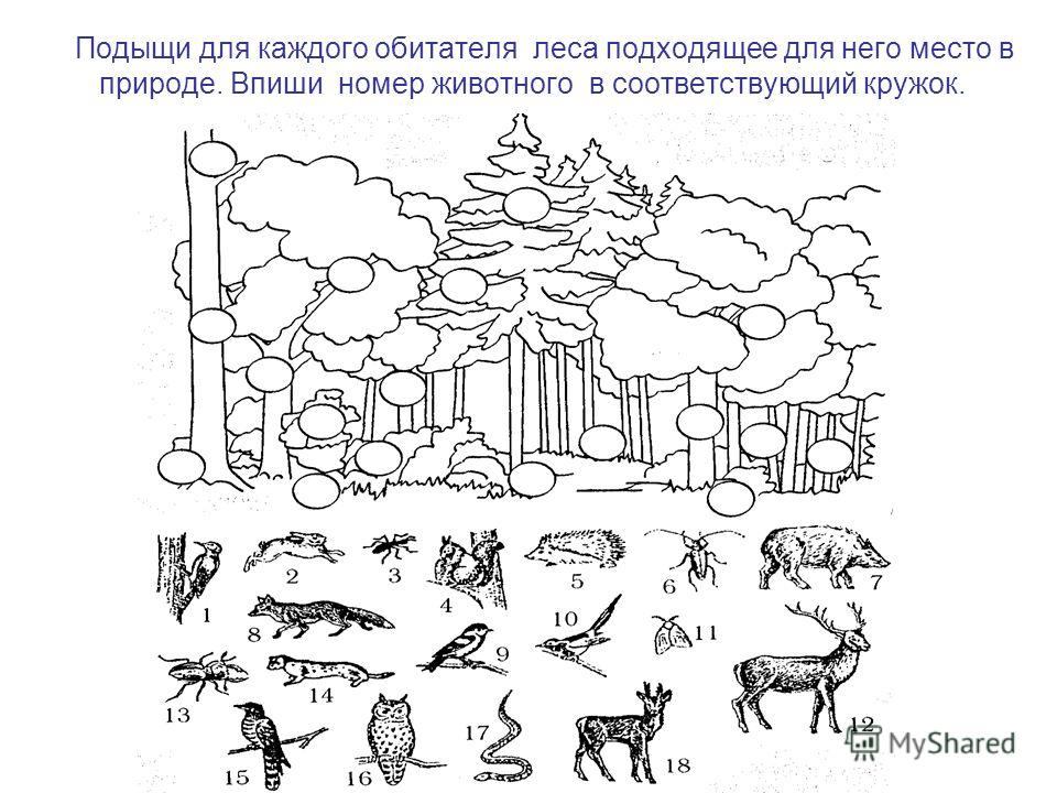 знакомства без регистрации советск кировской области
