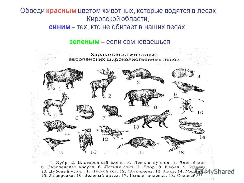 Обведи красным цветом животных, которые водятся в лесах Кировской области, синим – тех, кто не обитает в наших лесах. зеленым – если сомневаешься
