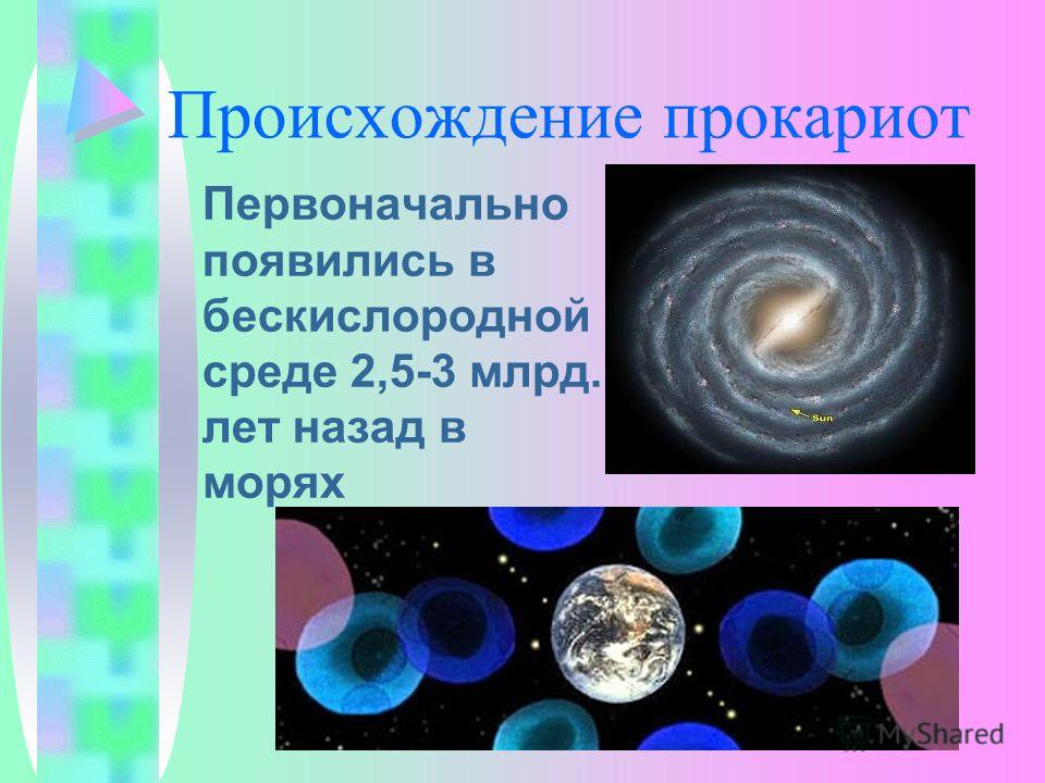Происхождение прокариот Первоначально появились в бескислородной среде 2,5-3 млрд. лет назад в морях