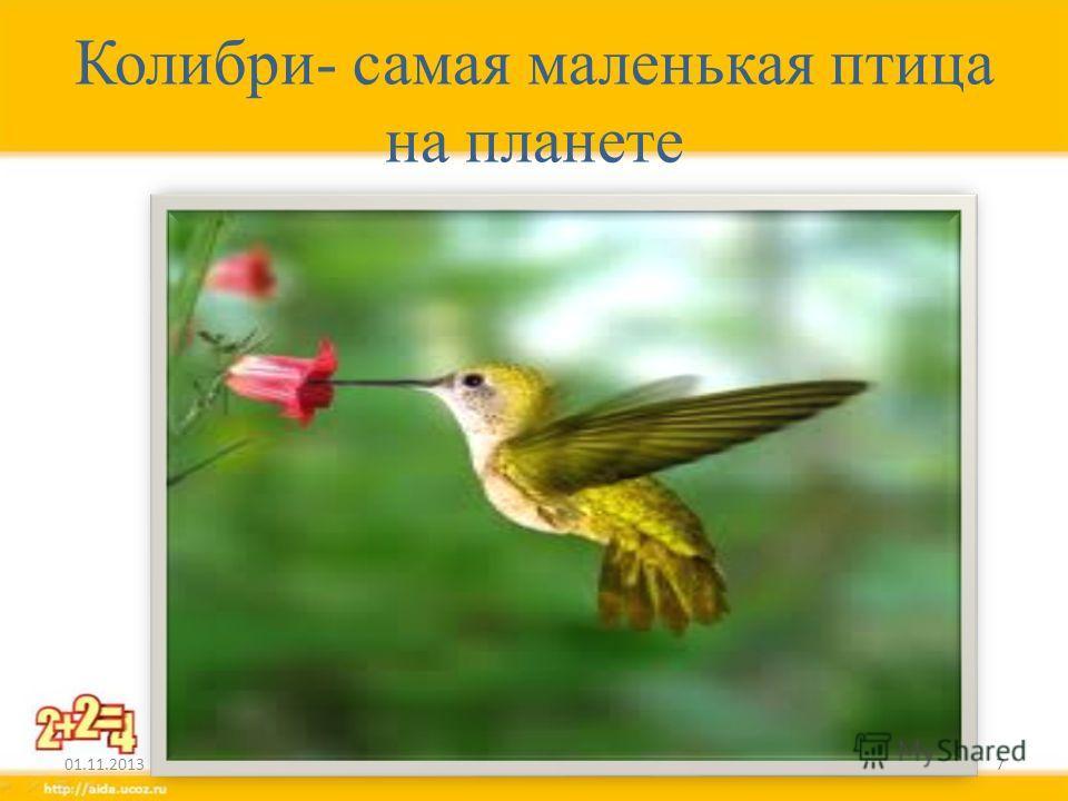 Колибри- самая маленькая птица на планете 01.11.20137