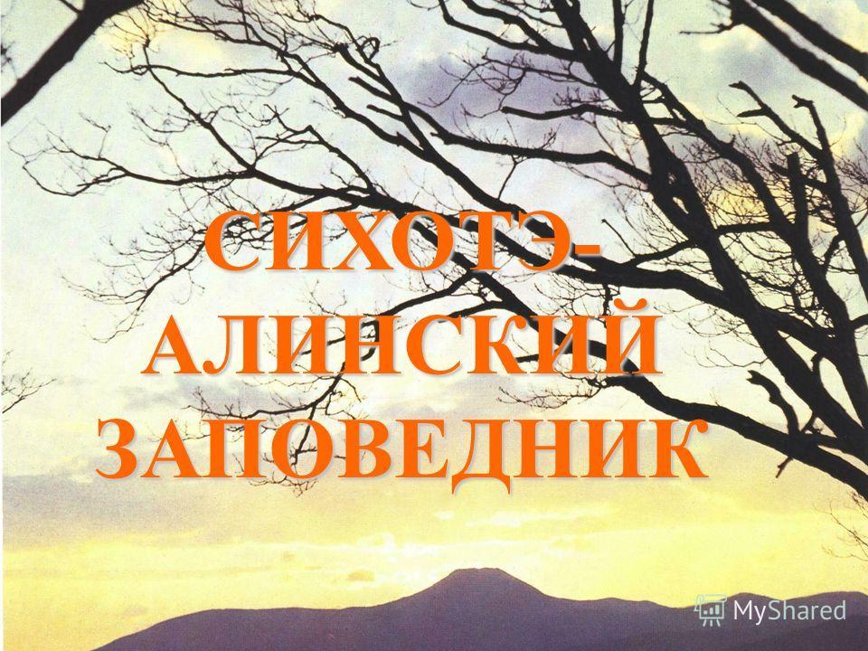 СИХОТЭ- АЛИНСКИЙ ЗАПОВЕДНИК