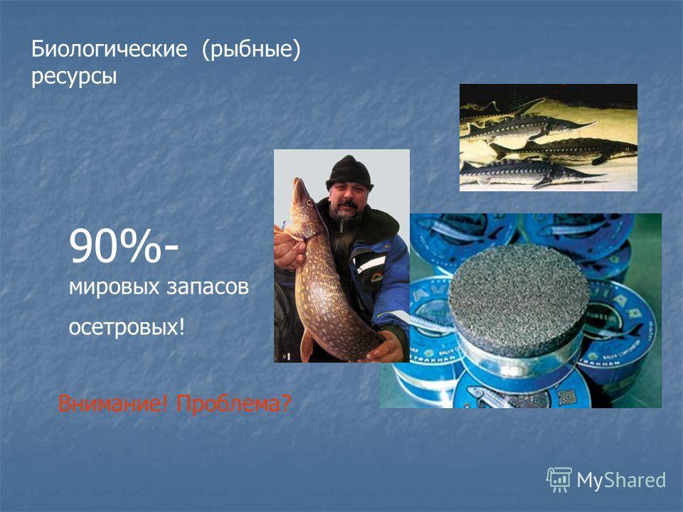 Биологические (рыбные) ресурсы 90%- мировых запасов осетровых! Внимание! Проблема?